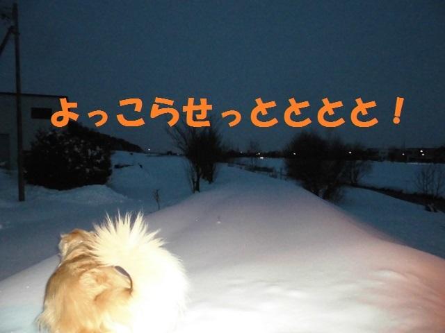 CIMG3942_P.jpg