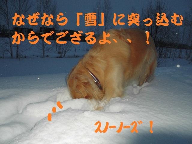 CIMG3954_P.jpg