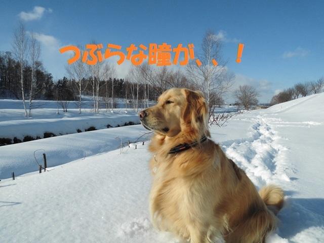 CIMG3957_P.jpg