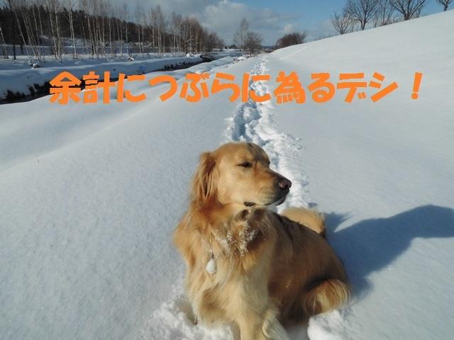 CIMG3958_P.jpg