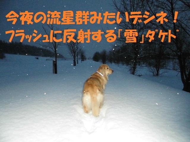 CIMG3985_P.jpg