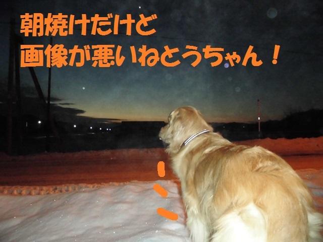 CIMG4046_P.jpg