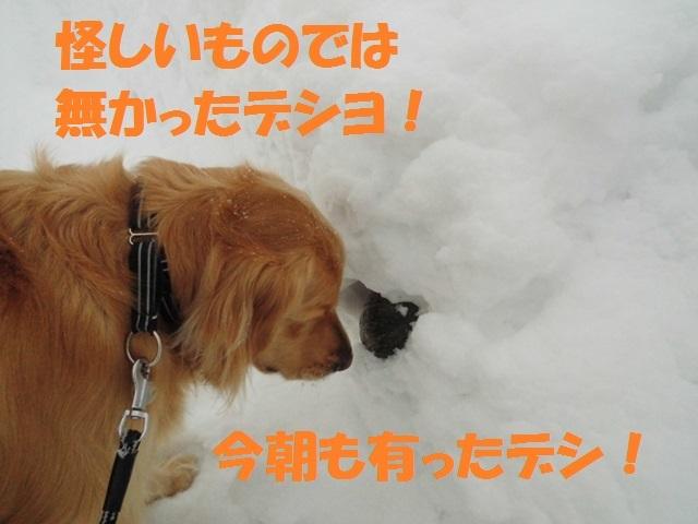 CIMG4125_P.jpg