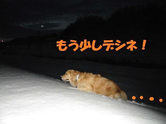 CIMG4132_P.jpg