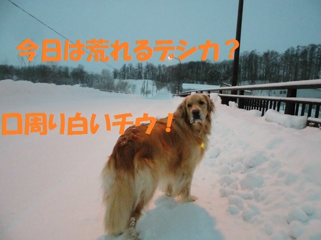 CIMG4158_P.jpg