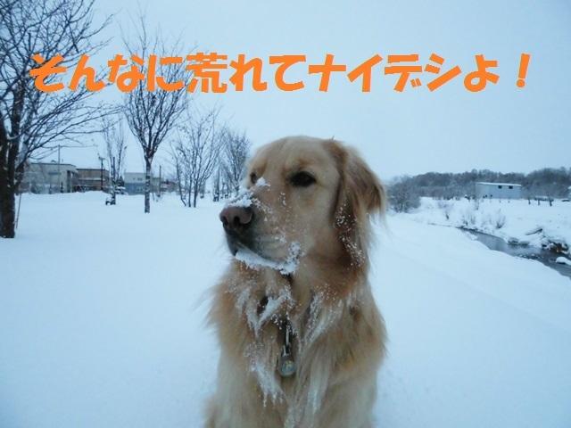 CIMG4160_P.jpg