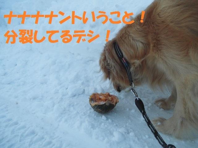 CIMG4166_P.jpg