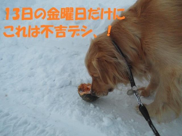 CIMG4167_P.jpg