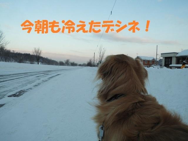 CIMG4169_P.jpg