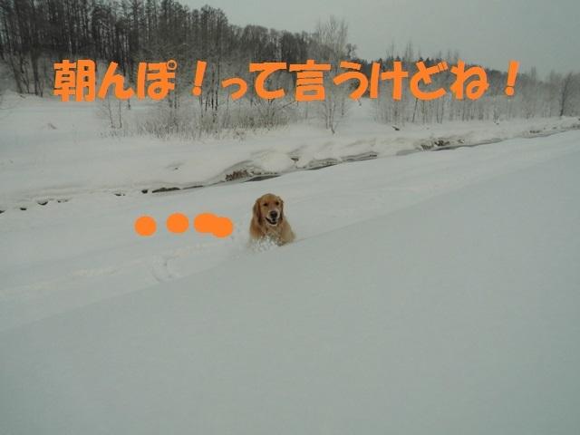 CIMG4171_P.jpg
