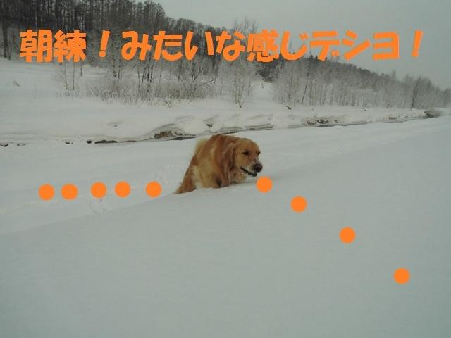 CIMG4172_P.jpg