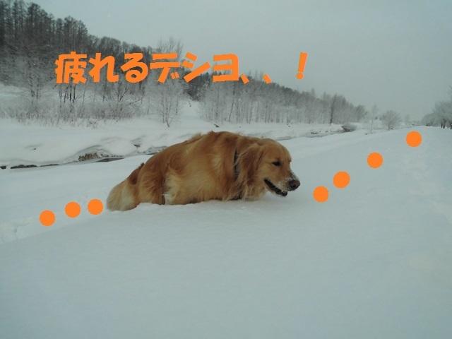 CIMG4173_P.jpg