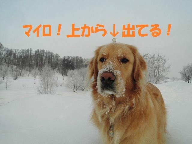 CIMG4176_P.jpg