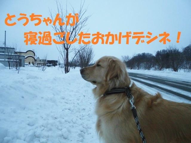 CIMG4188_P.jpg