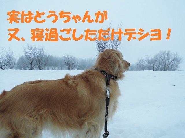CIMG4194_P.jpg