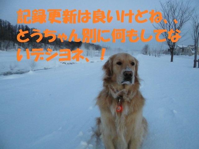 CIMG4215_P.jpg