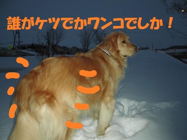 CIMG4246_P.jpg