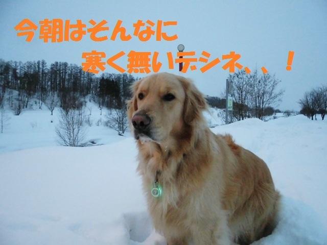 CIMG4251_P.jpg