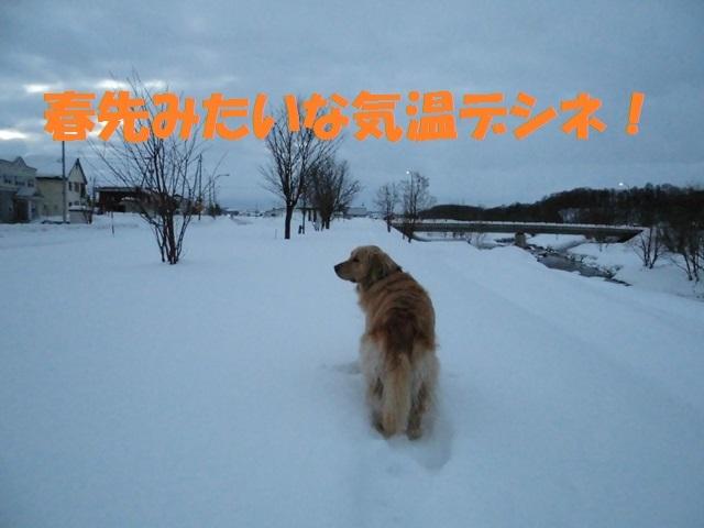 CIMG4275_P.jpg