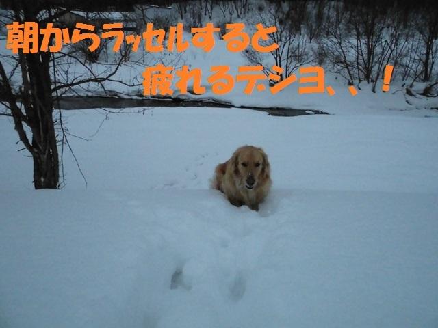 CIMG4276_P.jpg