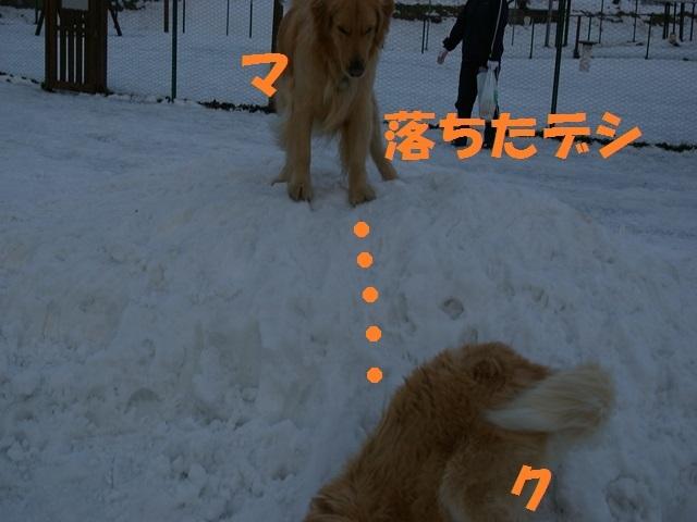 IMGP0805_P.jpg