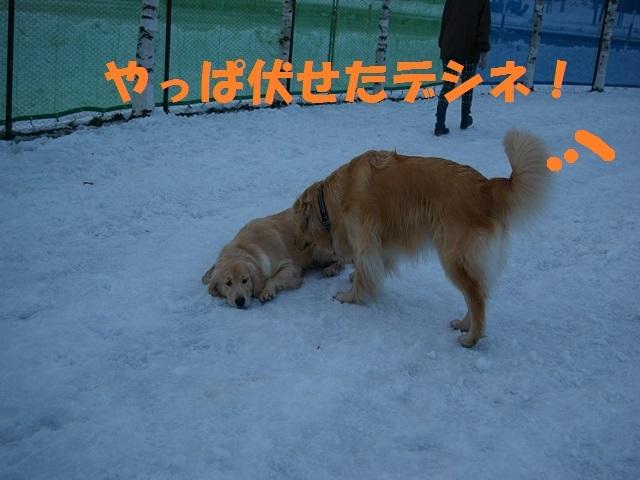 IMGP0809_P.jpg