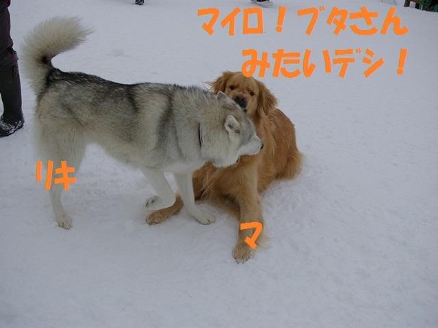 IMGP0831_P.jpg