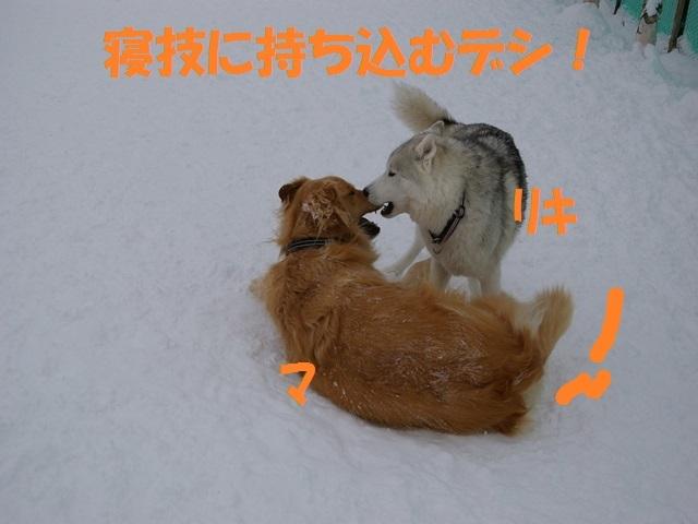 IMGP0835_P.jpg