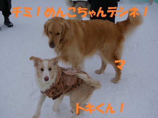 IMGP0866_P.jpg