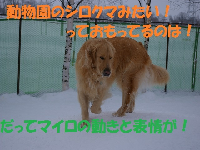 IMGP0877_P.jpg
