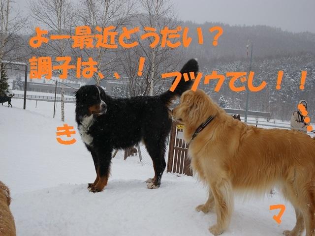IMGP0890_P.jpg