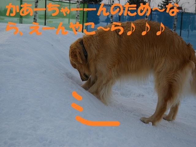 IMGP0940_P.jpg