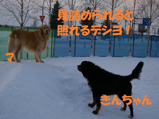 IMGP0946_P.jpg