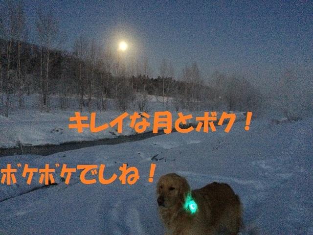 IMG_0642_P.jpg