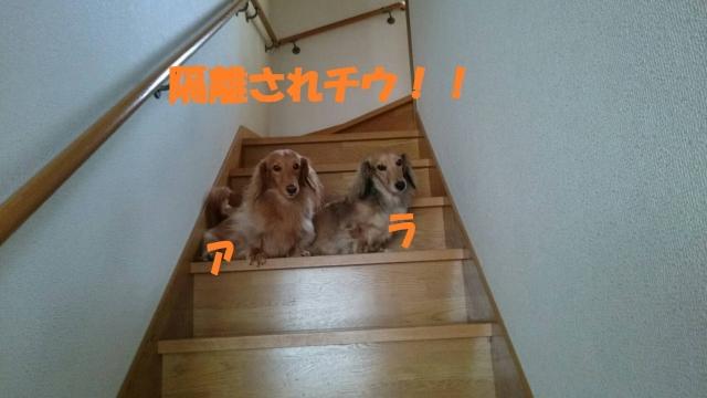 IMG_0855.jpg