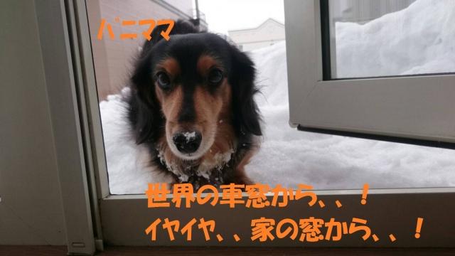 IMG_1085.jpg