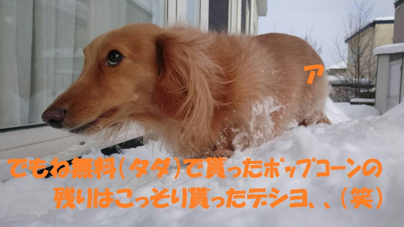 IMG_1380.jpg