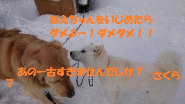 IMG_1457.jpg
