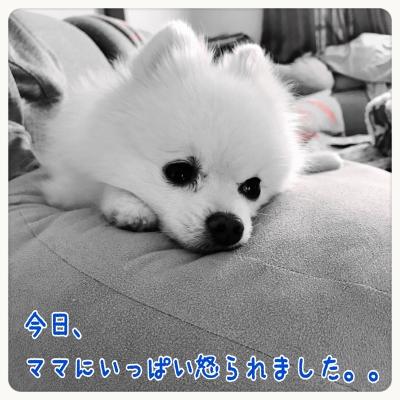 20161212225330e97.jpg