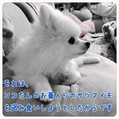 20161212225348d85.jpg