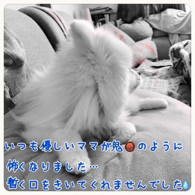 20161212225407ec0.jpg