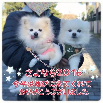 20161231021224f5c.jpg