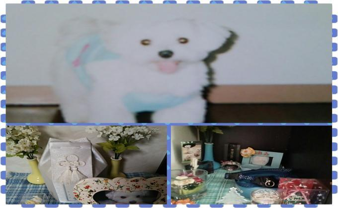 PhotoGrid_1480215672715_convert_20161127134241.jpg