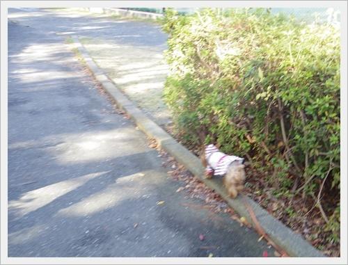 散歩IMGP5241-20120103