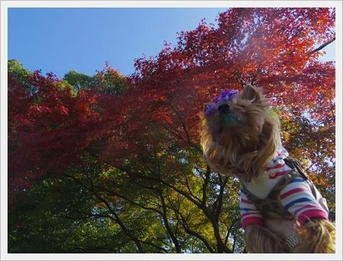 散歩IMGP5249-20120103