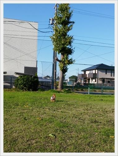 銀杏IMG00267-20161130
