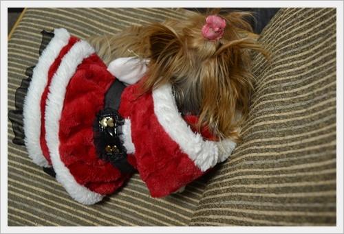 クリスマスDSC_0311-20161224