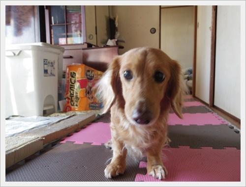 岡山IMGP5461-20120103