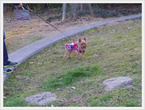岡山IMGP5476-20120103