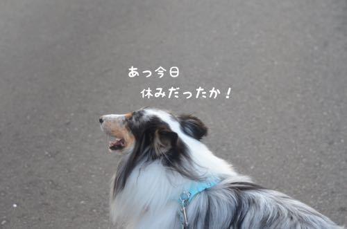 IMG_3529.jpg